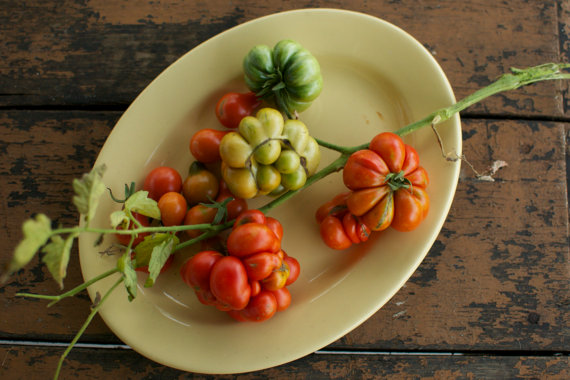 heirloom tomato seeds