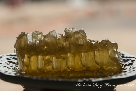 Honey Comb by Modern Day Forager