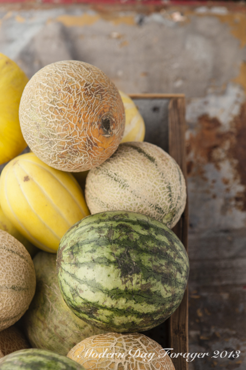 Melon Week on Modern Day Forager